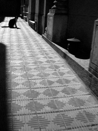 gato3.jpg